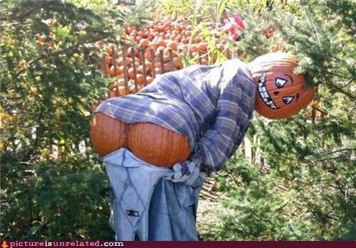 awesome butt pumpkins wtf - 5319828224