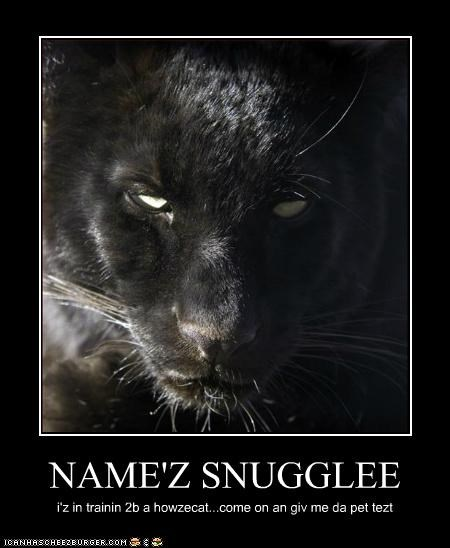 NAME'Z SNUGGLEE