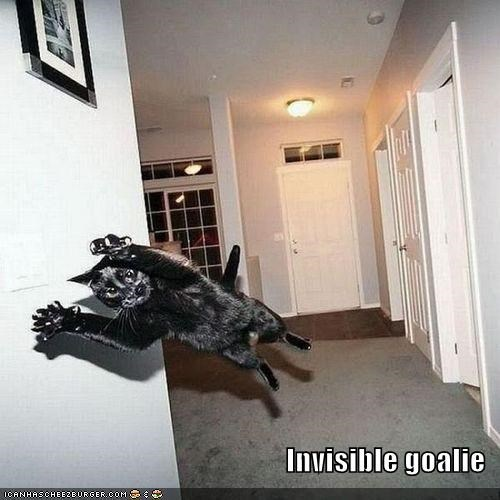 athlete athletics cat goalie I Can Has Cheezburger invisible invisible goalie sports