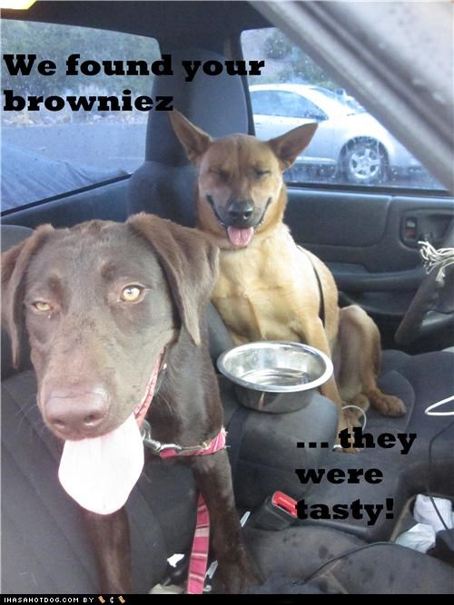 best of the week brownies chill chill out cool Good Times Hall of Fame high mixed breed munchies smile smiles smiling Special Brownies what happened whats going on - 5320832768