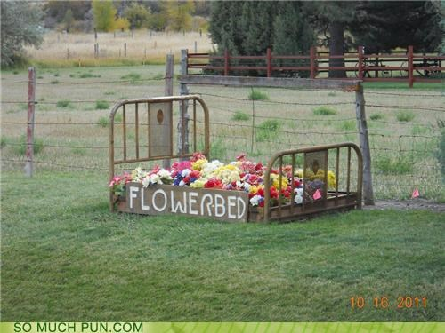 bed,double meaning,Flower,flowerbed,literalism