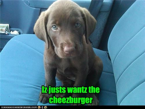 Cheezburger Image 5322529024