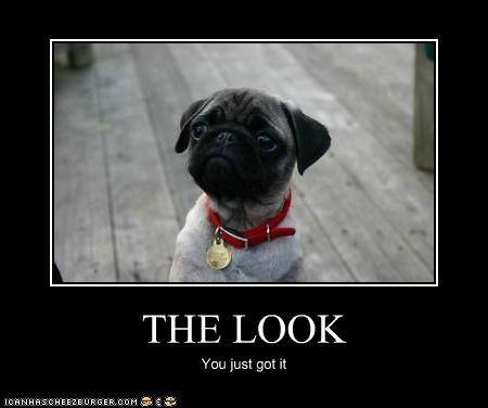 adorbz,awww,cute face,pug,the look