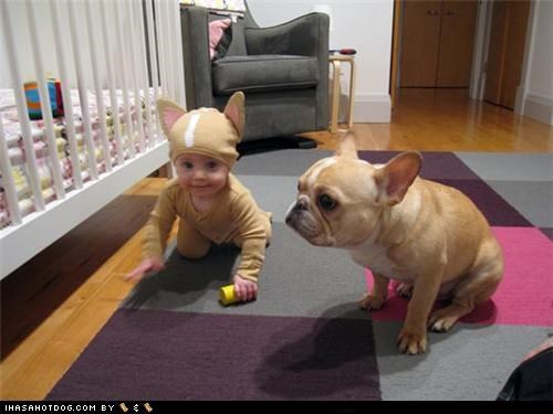 adorbz,awww,baby,costume,french bulldogs,friends,friendship,halloween,howl-o-ween,kid