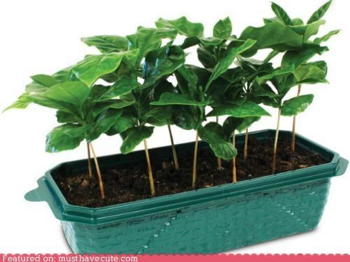 coffee DIY gardening planter plants - 5323303424