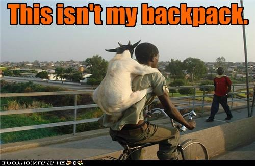 animals backpack bike goat hold on this-isnt-my