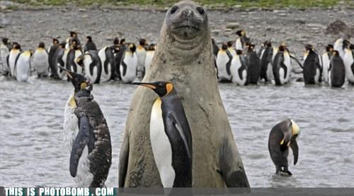 Animal Bomb,animals,best of week,nature,penguins,seals