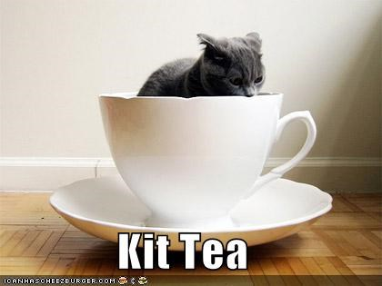 cat,cup,I Can Has Cheezburger,kit tea,kitten,tea