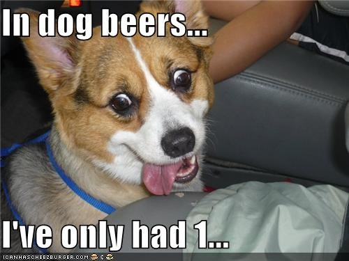 alcohol beer corgu cross eyed derp drinking drunk silly dog tongue tongue out - 5323765504