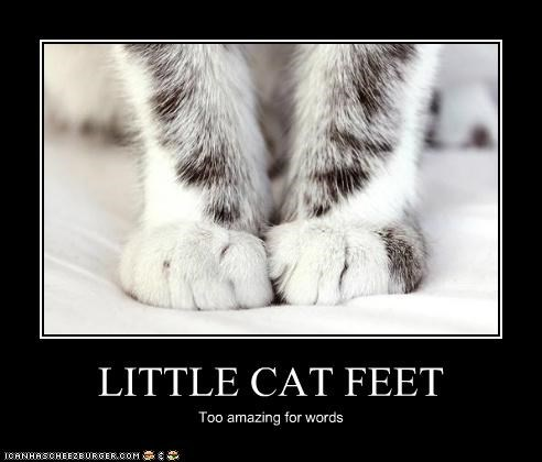 LITTLE CAT FEET Too amazing for words