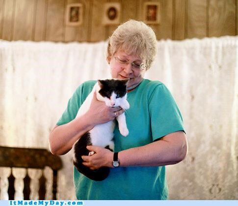 animals Cats good news happy heroes hopeful news story win - 5323896320