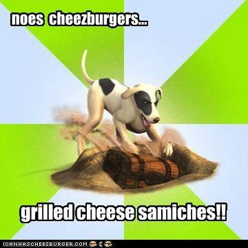 Cheezburger Image 5324190464