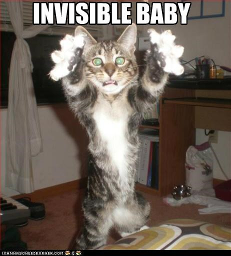 baby caption captioned cat do not want gross holding human invisible - 5324417024