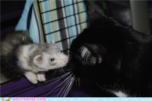 baby cat encounter family feline friends Interspecies Love meeting sniffing squee spree weasel - 5325093888