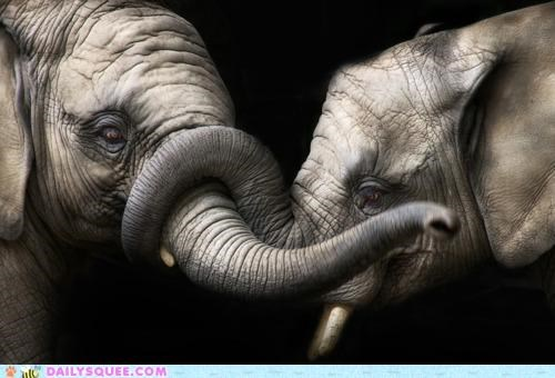 elephant elephants gesture literal love lovers loving powerful snuggling strong trunk - 5325137664