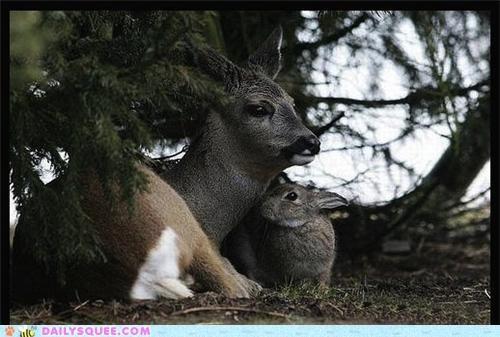 bambi better bunny cuddling deer disney friends friendship Hall of Fame improvement Interspecies Love IRL love rabbit thumper - 5325167616
