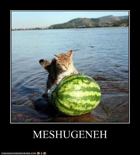 Cheezburger Image 5325436160