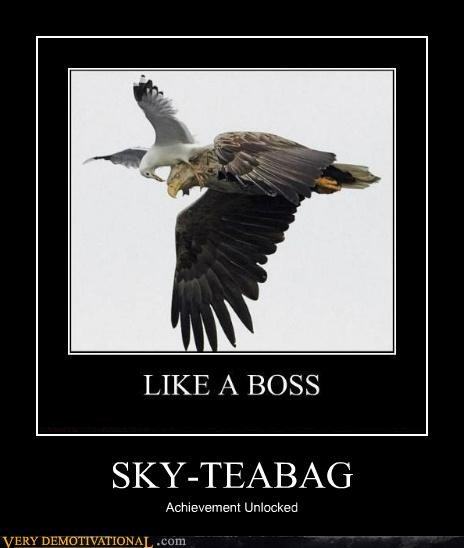 achievement animals eagle Pure Awesome seagull sky teabag - 5325713664