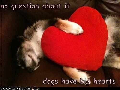 adorbz aww heart hearts plush toy whatbreed - 5325948416