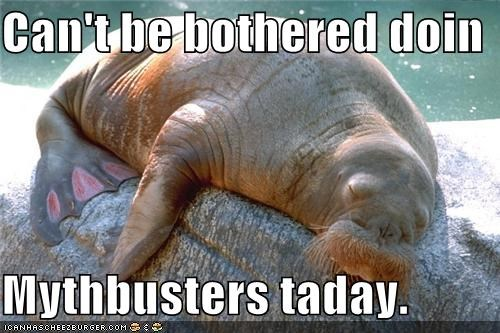 be,bothered,cant,captioned,doing,mythbusters,sleeping,TLL,today,walrus