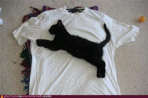 cat,real,T.Shirt,wtf
