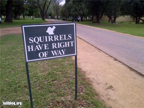 animals,failboat,g rated,oddly specific,signs,squirrels