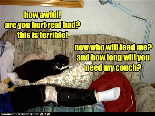 awful borked broken caption captioned cat couch feed Hall of Fame human hurt injured injury leg question questions upset