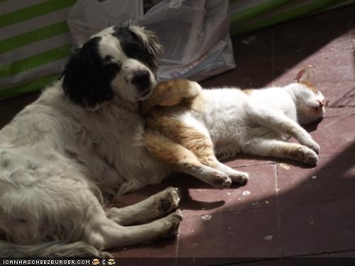 butts,dogs,goggies,goggies r owr friends,Interspecies Love,personal space,pillows,sleeping,sun,sunbeam