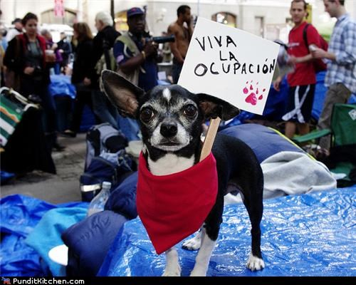 99 dogs Occupy Wall Street political pictures - 5327164672