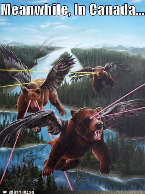 awesome,bears,bears with laser eyes,Canada,canadian,caption contest