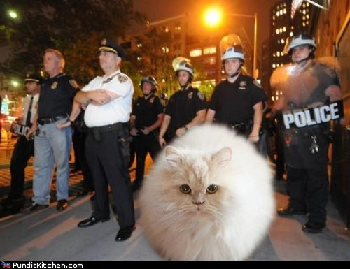 99 Cats kittehs Occupy Wall Street political pictures - 5327258112