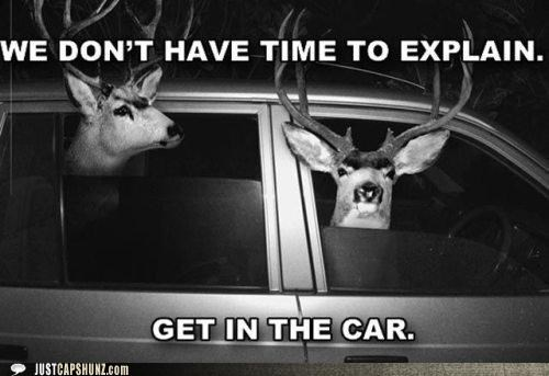 animals,deer,get in the car,i-have-no-idea-whats-going-on,no time to explain,wtf,you-can-drive