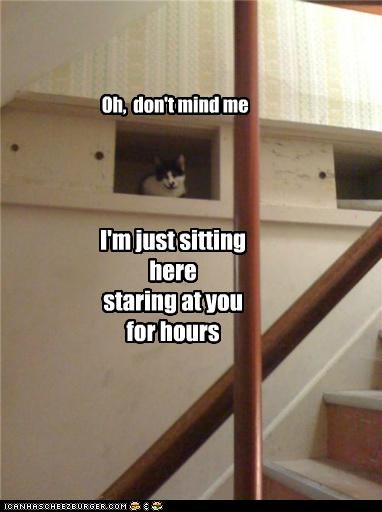 caption captioned cat creeper creepy dont dont-mind-me here hours me mind sitting Staring you - 5327435776