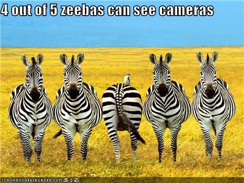 animals camera standing around wildlife zebras zeebas - 5327485440