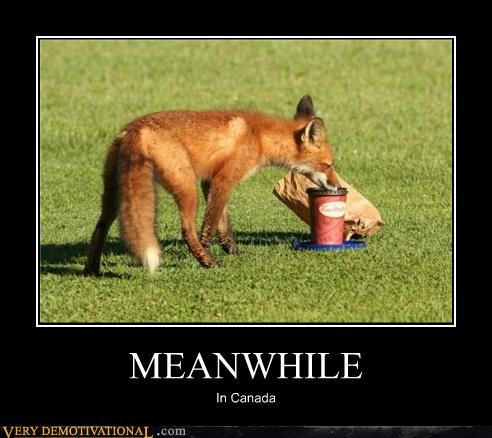 animals,Canada,coffee,food,fox,hilarious,Meanwhile
