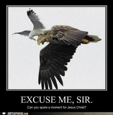 animals birds demotivator eagle excuse me jesus recruitment seagull - 5327878656