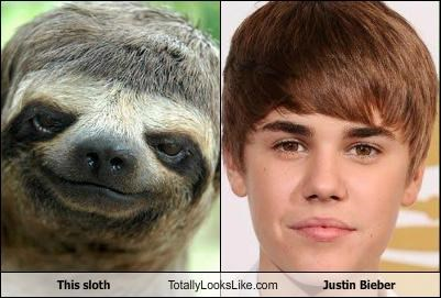animal,celeb,funny,Hall of Fame,justin bieber,sloth,TLL