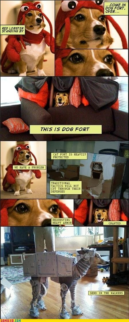 best of week,Catfort,dogs,Dog Fort,dog walker,dogfort,red lobster