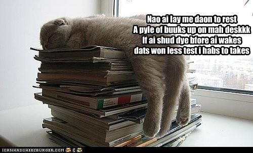 before,books,caption,captioned,cat,desk,die,down,Hall of Fame,hypothetical,lay,less,now,one,pile,poem,rest,rhyme,sleeping,take,test,wake