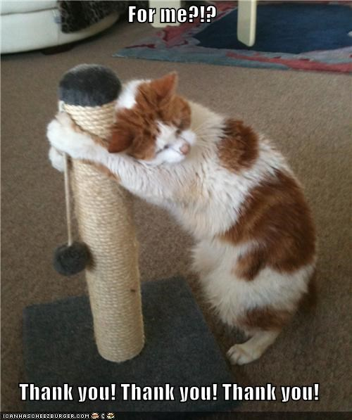 best of the week cat christmas christmas present gift Hall of Fame I Can Has Cheezburger scratching post