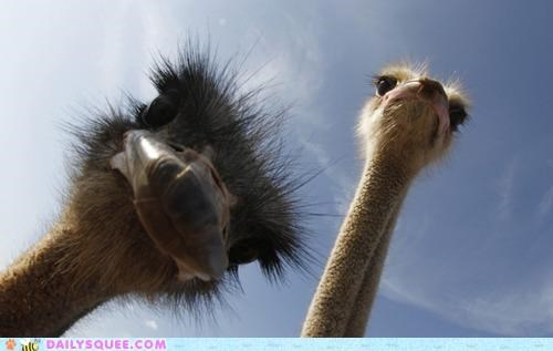 acting like animals confused ground looking up observing ostrich ostriches perspective question upside down - 5329182720