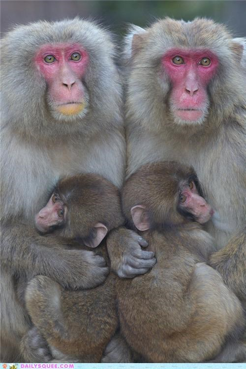 Babies,baby,cuddling,identical,imitation,mirror,monkey,monkeys,parent,parents,similar poses,simulacra,simulacrum,uniquness