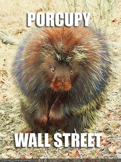 caption captioned occupy Occupy Wall Street porcupine pun Wall Street - 5329223680