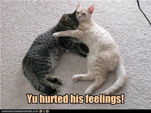 caption captioned cat Cats consoling cuddling feelings hurt tabbies tabby you - 5329761280