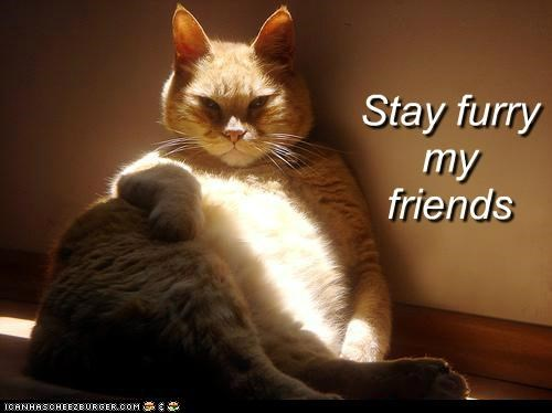 best of the week caption captioned cat Hall of Fame I Can Has Cheezburger meme stay furry my friends stay thirsty my friends the most interesting cat the most interesting man in the world