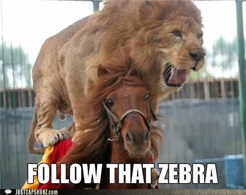 animals,follow,follow that zebra,horse,Horse Racing,i-have-no-idea-whats-going-on,lion,lion riding a horse,wtf