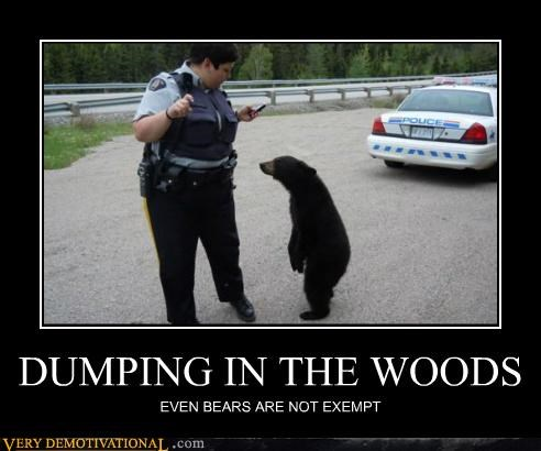 bears,hilarious,police,ticket,wtf