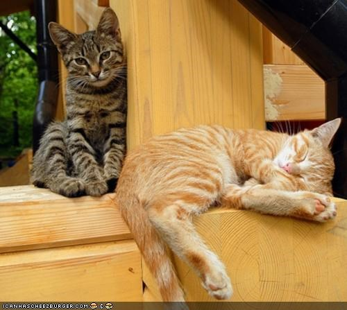 cyoot kitteh of teh day friends sleeping two cats watching - 5332242432