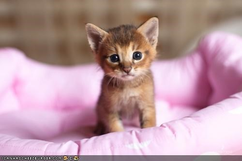 bed cyoot kitteh of teh day pink sitting - 5332247552