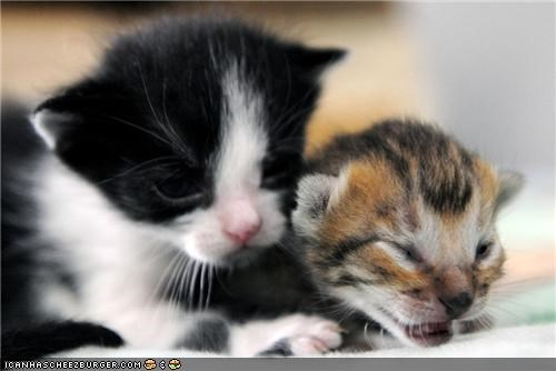 bff,cyoot kitteh of teh day,friends,Interspecies Love,kitten,tigrillo,tiny